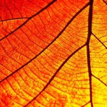 Image of autumn leaf